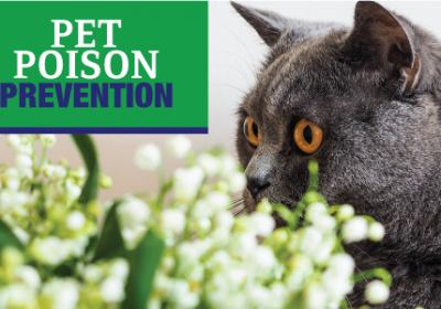 Pet Poison Prevention