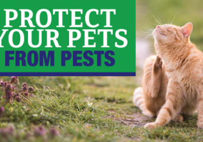 Protect Your Pets From Pests
