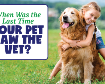 The Importance of Regular Pet Care