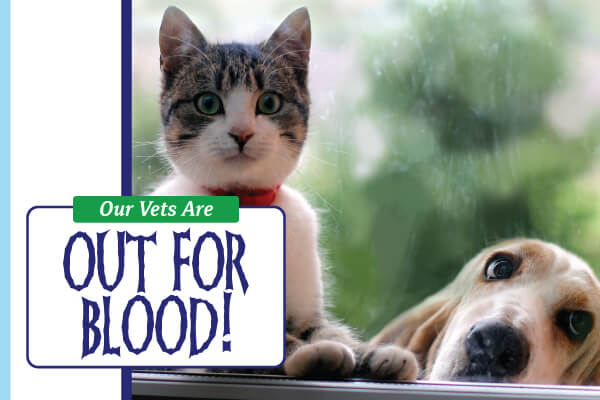 Our Vets Are Out for Blood!