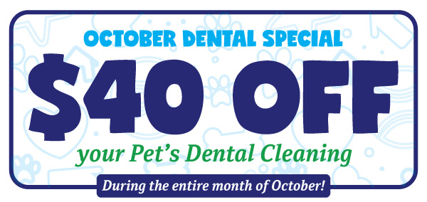 Save $40 on Your Pet's Dental | Meadow Wood Animal Hospital