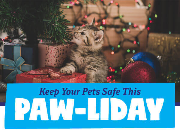 Keep Your Pets Safe This Paw-liday!