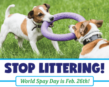 Stop Littering! World Spay Day is Feb. 26th!