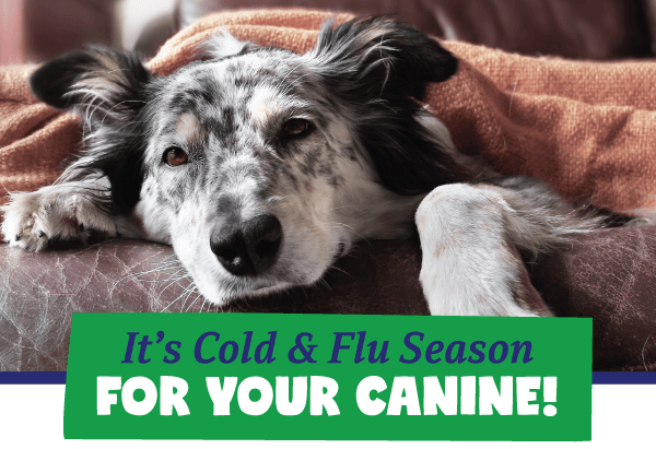 It's Cold & Flu Season for Your Canine